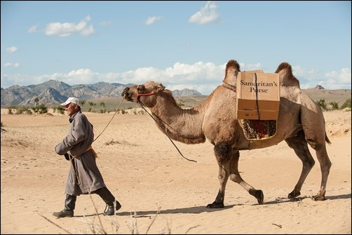 shoebox transportation by camel