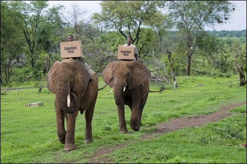 shoebox transportation by elephant